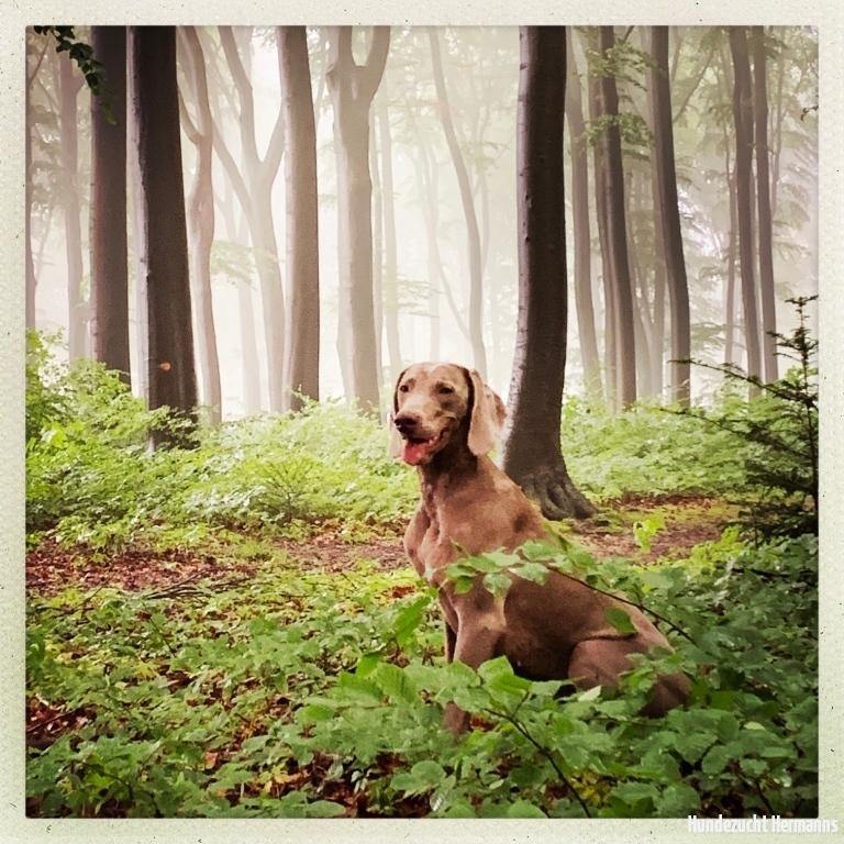 Amelie-im-Wald-