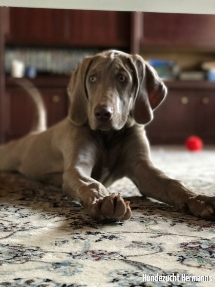 Emerson - der entspannte Hund