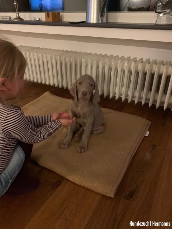 Enook - kleiner Hund was nun?