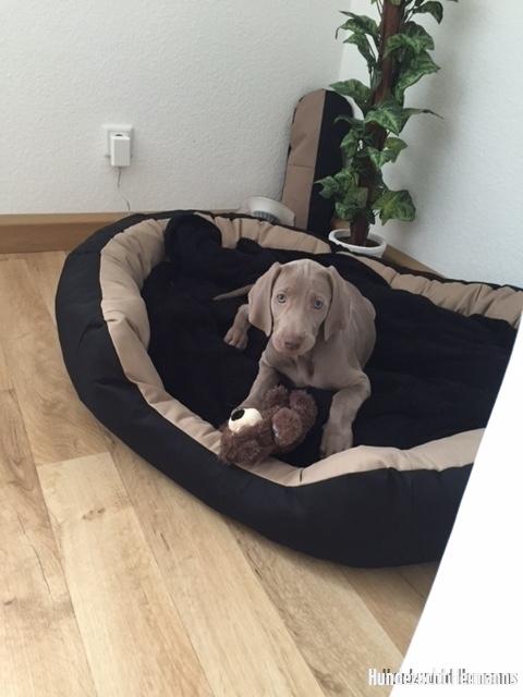 Irka-Luna - im neuen zu Hause
