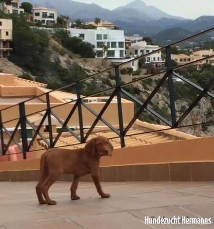 Mayla - auf Mallorca