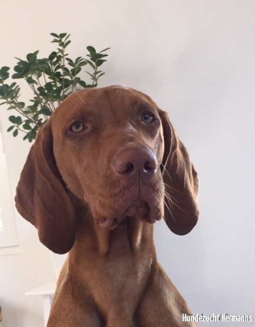 Rufus - Geburtstagskind