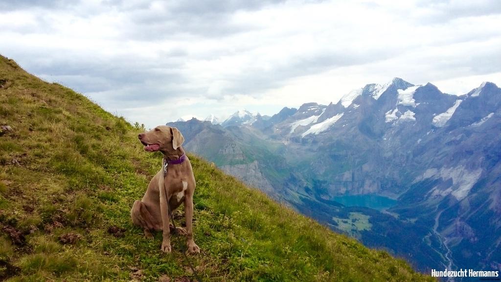 Scott- in den Berner Bergen -Bluemlisalp 2549m hoch -
