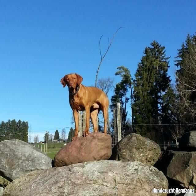 Varick - der Kletterer
