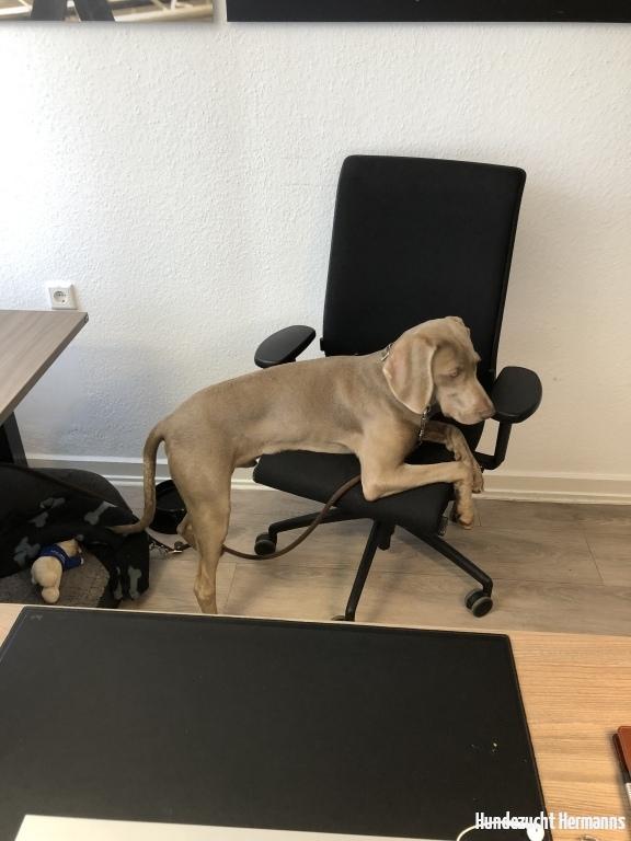 Wilson-  das ist mein Chefsessel