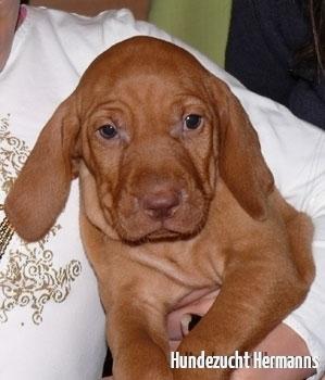 Kleiner Hund was nun?
