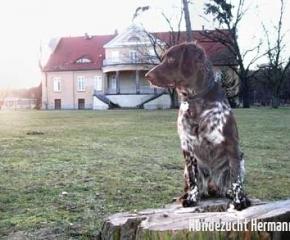 Edeler Hund in vornehmer Umgebung