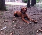 Felia - im Wald