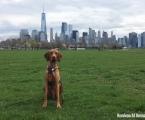 Rufus in NY