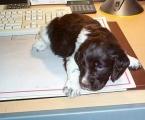 Büroarbeit ist ziemlich ermüdend!