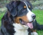 Max, 1 Jahr alt