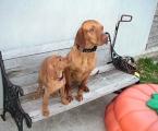 Gracie und ihr Schwarm Foxey (Wildförster)