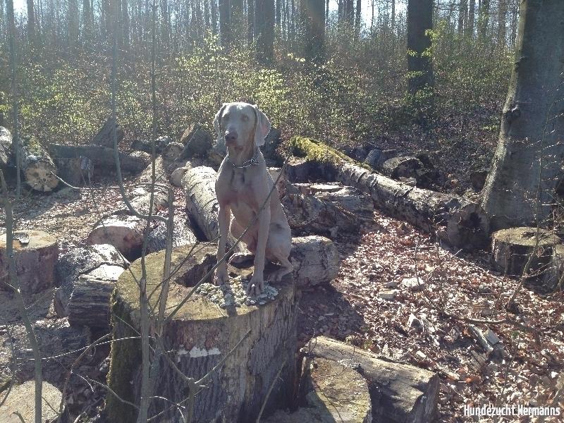 Todd im Wald